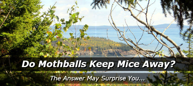 Do Mothballs Repel Cats Cute Cats