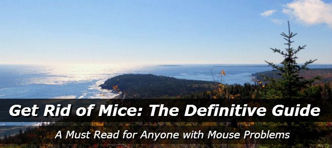 Get Rid of Mice: The Definitive Guide