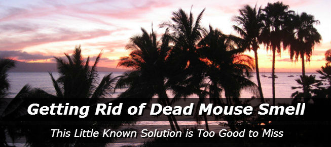 Getting Rid of Dead Mouse Smell