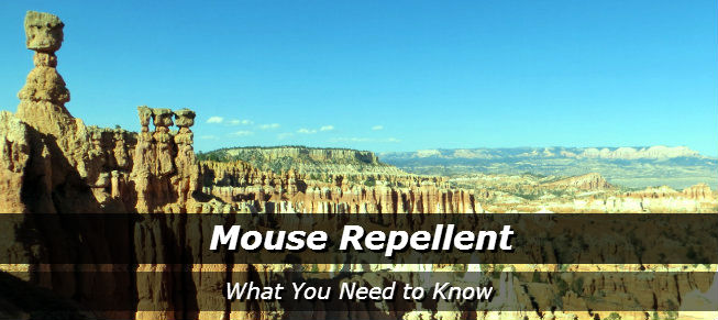 Mouse Repellent: What You Need to Know