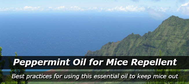 Get Rid of Mice with Peppermint Oil